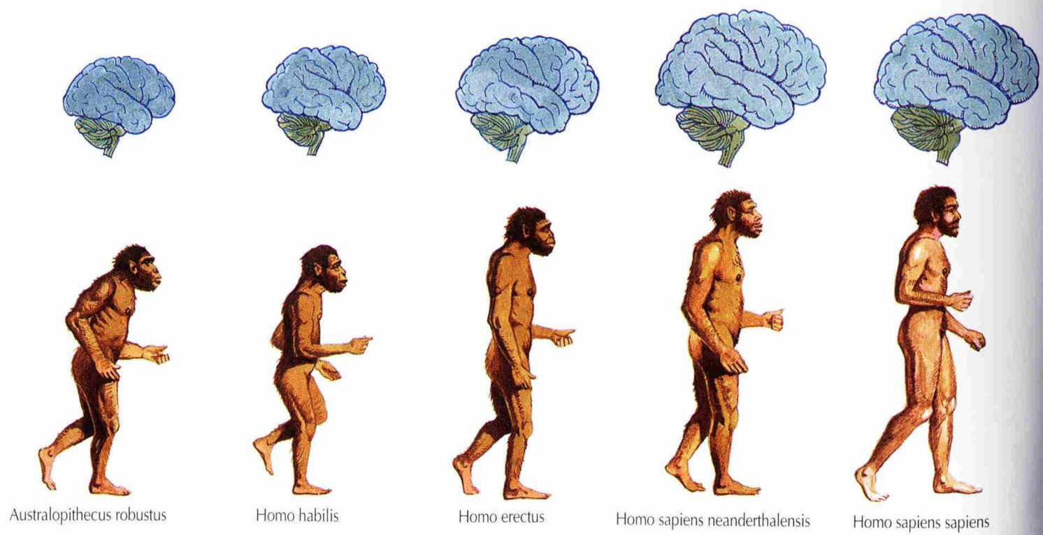 a review of the life of homo sapiens in the film brainorigin of us One grand search engine for all the qualities that make homo sapiens different from other species as well as in the origin of more by michael s gazzaniga.